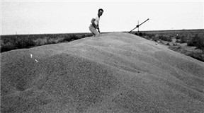 Frank William Abner Conard on a pile of wheat he harvested in 1947