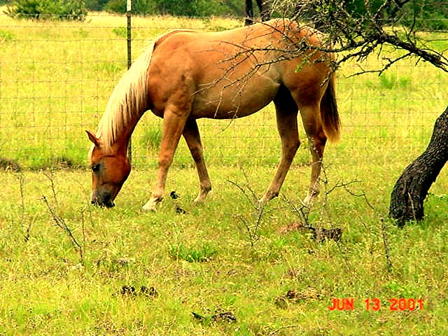 [BlonDee in Pasture at Lucky Hit Ranch in Summer 2001]