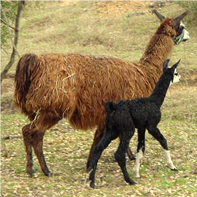Lucky Hit Catherine the Great as a cria