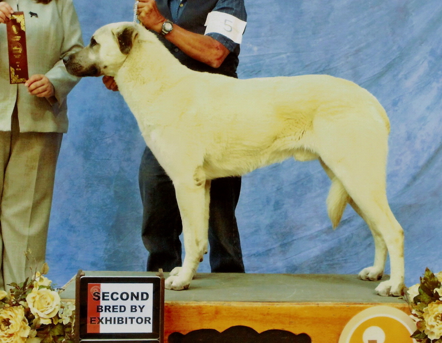 KEYIF on May 5, 2012 Major, BOB, Championship & GP 2 BBE, 5th Born in CASE/BETHANY litter 11/5/2009!!!)