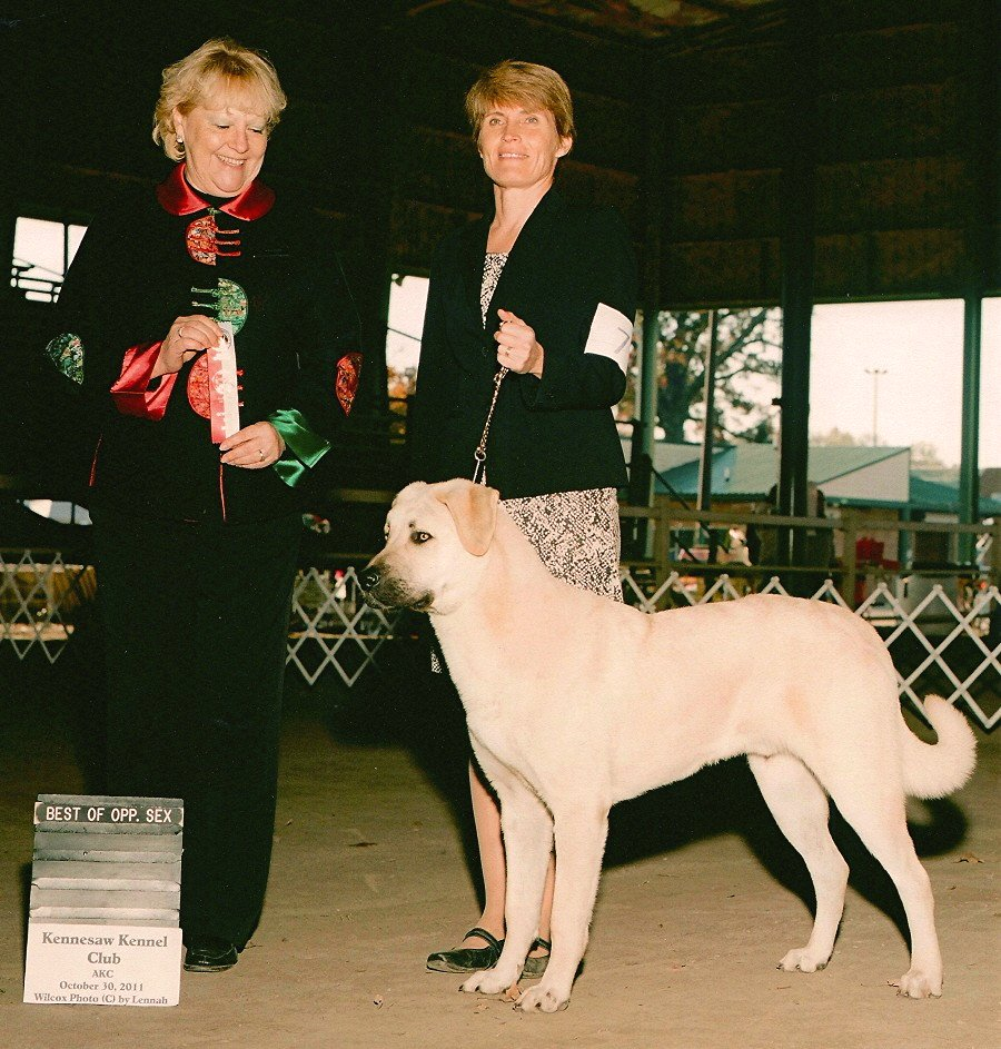 Rondo, BOS over two CHAMPION SPECIALS from 6-9 Puppy Class !!!)