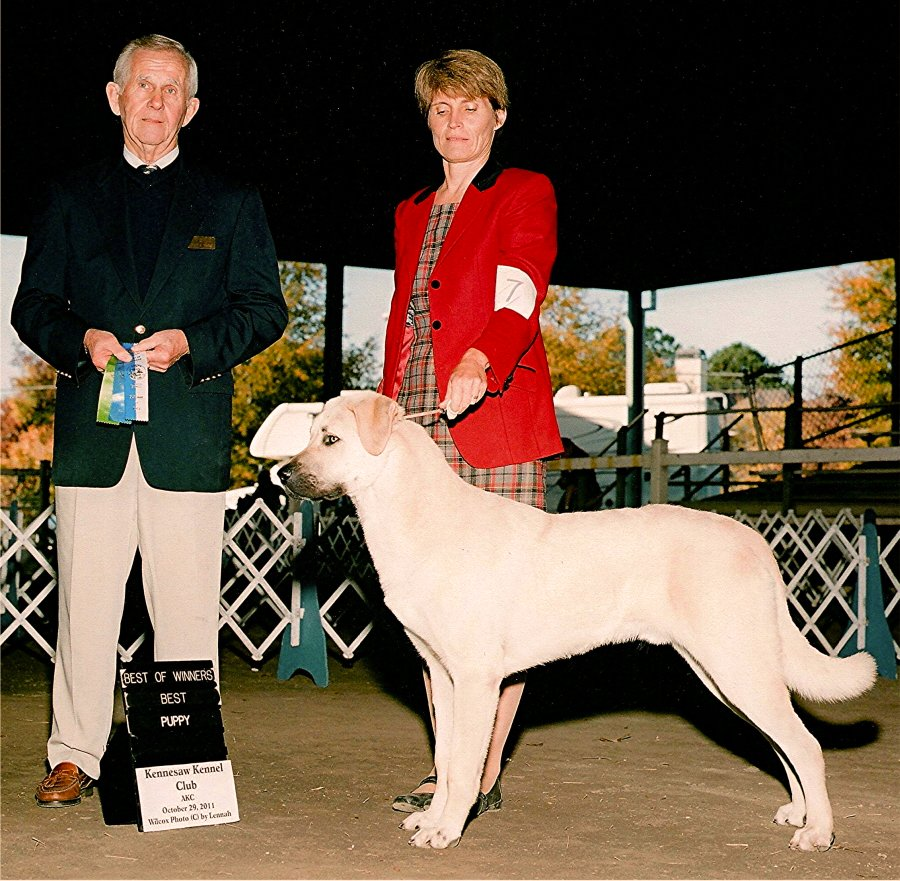 Rondo, BEST OF WINNERS and a THREE POINT MAJOR from 6-9 Puppy Class !!!)